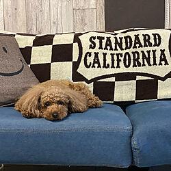 スタカリ/スタンダードカリフォルニア/STANDARD CALIFORNIA /デニムソファ/いぬのいる暮らし...などのインテリア実例 - 2020-06-02 00:51:20
