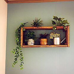 棚/DIY/ダイソー/観葉植物のインテリア実例 - 2017-03-06 07:59:08