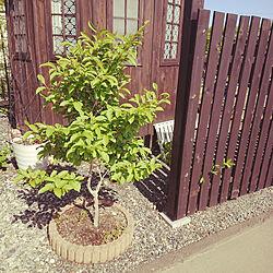 部屋全体/観葉植物/シンボルツリー/自宅でカフェ始めました/DIYのインテリア実例 - 2021-05-12 14:36:24