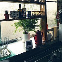 キッチン/植物/昭和の家/溢れ出す生活感/中古戸建て...などのインテリア実例 - 2016-05-20 17:03:25