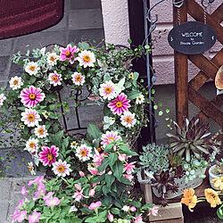 ジニア プロフュージョン/リース寄せ植え/花のある暮らし/グリーンのある暮らし/庭...などのインテリア実例 - 2019-06-09 18:36:58