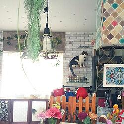 キッチン/猫と暮らす/生活感のある家/壁面ディスプレイ/セリア...などのインテリア実例 - 2019-12-02 19:52:15
