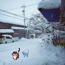 玄関/入り口/いいねコメありがとう(〃∇〃)/築50年以上/雪/気を付けてのインテリア実例 - 2017-01-21 07:56:52