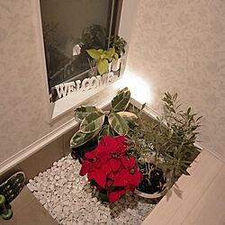 玄関/入り口/小さなお家/オリーブ/ポインセチア/ゴムの木のインテリア実例 - 2020-12-30 17:24:44