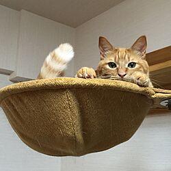 リビング/ペットと暮らすインテリア/猫と暮らすマンション/にゃんション/ブログもしてます...などのインテリア実例 - 2015-08-22 20:49:38
