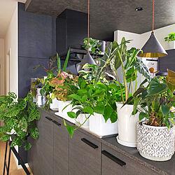 キッチン/植物のある暮らし/花のある暮らし/吹き抜けのある家/グリーンのある暮らし...などのインテリア実例 - 2021-04-05 21:34:19