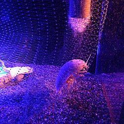 お気に入り☻/アクア/うちではなくてすみません/水族館のインテリア実例 - 2014-09-30 11:53:42