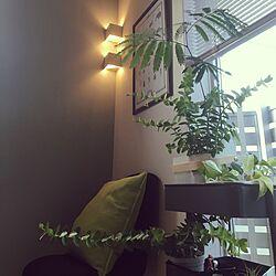 部屋全体/ダイニング照明/観葉植物/IKEA/植物...などのインテリア実例 - 2016-06-07 17:59:37