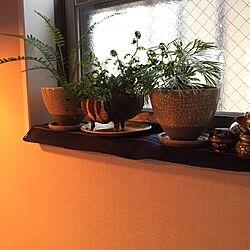 棚/ダイニングテーブル/器と植物/ダイニング/シダ...などのインテリア実例 - 2015-03-09 15:33:06