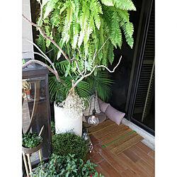 台湾/観葉植物/花/照明/IKEA...などのインテリア実例 - 2018-03-17 18:33:06