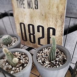 棚/DIYしたい/時間が欲しい…/サボテン/セメント鉢...などのインテリア実例 - 2016-05-21 10:42:52