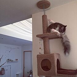 リビング/吹抜けのあるリビング/猫大好き/ねこのいる日常/キャットタワー...などのインテリア実例 - 2018-02-12 00:37:42