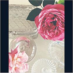ドレープ/ベランダ/バラ/ローラアシュレイ/薔薇...などのインテリア実例 - 2021-06-01 20:52:47