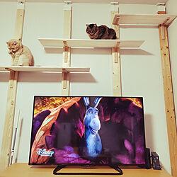 部屋全体/キャットウォークDIY/猫ばかりごめんなさい/猫と暮らすインテリア/猫...などのインテリア実例 - 2021-02-27 10:31:32