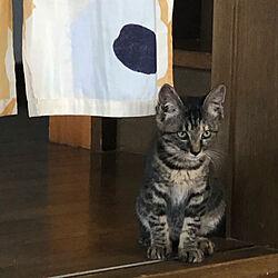 子猫と暮らす/ねこと暮らす/保護猫/猫のいる家/子猫が来ました...などのインテリア実例 - 2020-07-21 21:14:38