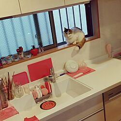 キッチン/ねこのいる風景/Pinkのインテリア実例 - 2015-12-21 07:31:25