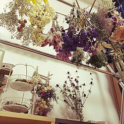 趣味の部屋/カフェ風/かすみ草/ねこのいる日常/花びん...などのインテリア実例 - 2021-06-25 10:45:51