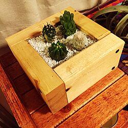 机/サボテン/DIY/多肉植物/多肉ちゃん...などのインテリア実例 - 2015-05-13 01:36:04