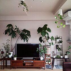 リビング/テレビボード/植物/観葉植物/IKEA...などのインテリア実例 - 2014-11-12 15:41:02