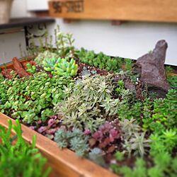 多肉植物/寄せ植え/セダム/木工/プランターDIY...などのインテリア実例 - 2016-09-28 21:07:24