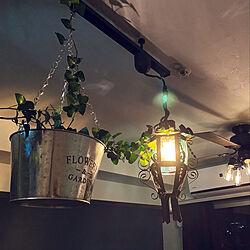 照明/観葉植物/壁/天井のインテリア実例 - 2020-02-23 02:38:03
