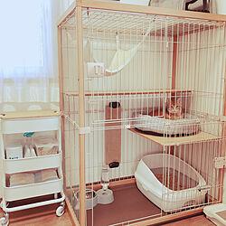 キャットケージ/茶トラ/猫が好き♡/IKEA/保護猫...などのインテリア実例 - 2021-03-01 22:36:54