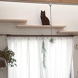 壁/天井/おうち猫カフェ/吹き抜けリビング/キャットウォーク/ねこのいる暮らし...などのインテリア実例 - 2018-05-18 10:56:58