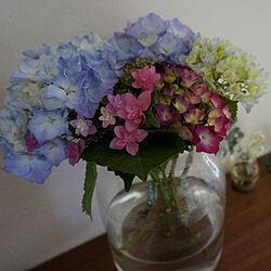 花壇/紫陽花/花のある暮らし/2階リビング/植物のある暮らし...などのインテリア実例 - 2020-06-07 17:50:58