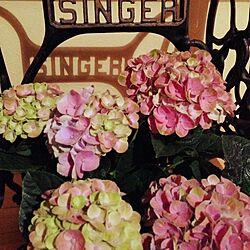 机/SINGERアンティークミシン脚/ハイドランジア/紫陽花のインテリア実例 - 2014-05-17 19:34:49