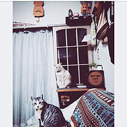 部屋全体/猫が大好きなんです/生活感のある部屋/いいね!ありがとうございます♪/猫カフェ風...などのインテリア実例 - 2018-02-07 20:28:52