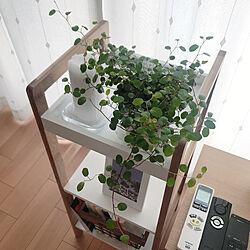 シンプル/植物/GREENのある暮らし/リラックス/癒し...などのインテリア実例 - 2020-05-02 15:02:31