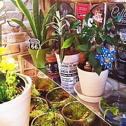 キッチン/観葉植物/ディスプレイコーナー/一人暮らし/カフェ風インテリアを目指して...などのインテリア実例 - 2020-04-04 17:41:18