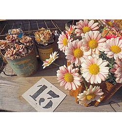 花が好き/花のある生活/マーガレット/多肉植物/花のある暮らし...などのインテリア実例 - 2019-03-24 20:38:08