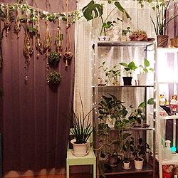 リビング/IKEA/植物のある暮らし/アロマディフューザー/流木ディスプレイ...などのインテリア実例 - 2021-07-25 21:44:40
