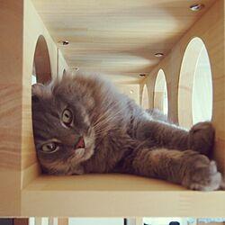ねこのいる暮らし/猫のいる風景/neco2cube/猫タワーのインテリア実例 - 2016-09-14 12:46:35