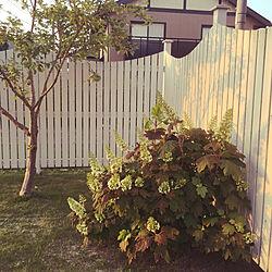 カシワバアジサイ/観葉植物/玄関/入り口のインテリア実例 - 2020-05-22 18:53:04