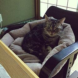 猫との生活/昭和のお家/猫ちゃんばかりでごめんなさい/部屋全体のインテリア実例 - 2021-10-17 09:38:36
