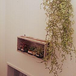 壁/天井/いなざうるす屋さん/フェイクグリーン/DIY/雑貨...などのインテリア実例 - 2014-10-26 19:31:30