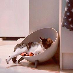 玄関/入り口/ねこと暮らす/シンプルな暮らし/猫ベッド/娘の猫のインテリア実例 - 2021-08-30 22:10:15