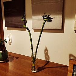 玄関/入り口/植物のある暮らし/タマホーム/バンブー/IKEAで購入のインテリア実例 - 2021-03-13 23:39:24