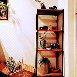 壁/天井/100均/観葉植物/セリア/みどりのある暮らし...などのインテリア実例 - 2020-12-27 08:40:29