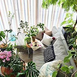 リビング/観葉植物/ミックスインテリア/植物のある暮らし/ボタニカルのインテリア実例 - 2018-03-12 13:07:21