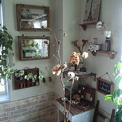 リビング/コットンフラワー/植物のインテリア実例 - 2013-11-05 18:14:19