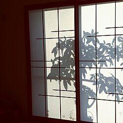 ベッド周り/和室/パキラが元気です(^。^)/障子やぶれちったのインテリア実例 - 2016-11-17 10:18:46
