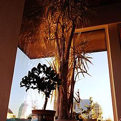 キッチン/大きな窓/漆喰壁/子供と暮らす家/しろが好き...などのインテリア実例 - 2020-06-05 13:01:53