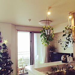 植物/クリスマス/100均/ダイソー/雑貨...などのインテリア実例 - 2015-11-14 13:34:48