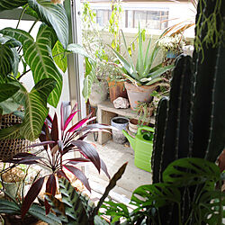 植物のある暮らし/植物/ミッドセンチュリー/NO GREEN NO LIFE/グリーンディスプレイ...などのインテリア実例 - 2020-08-02 18:32:23