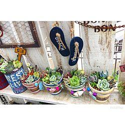 玄関/入り口/多肉棚/多肉寄せ植え/多肉植物/多肉...などのインテリア実例 - 2016-05-22 00:38:49