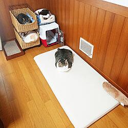 リビング/再利用/一人暮らし/猫と暮らす/猫との暮らし...などのインテリア実例 - 2021-05-08 17:07:36