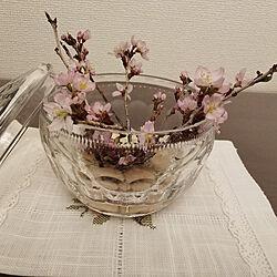 桜のインテリア実例 - 2021-03-09 20:16:23